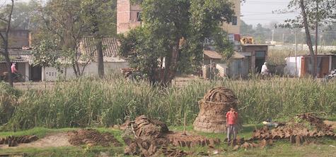 Cowpat harvesting