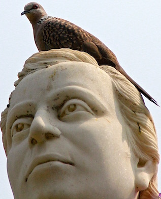 Spotted Dove atop statue of Anagarika Dharmapala, Sarnath