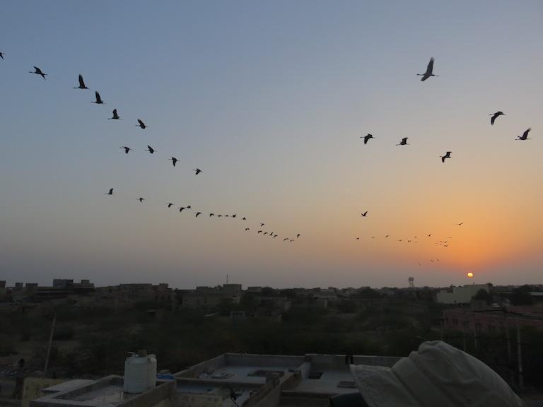 Dawn at Khichan