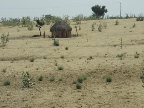 Thar Desert Scene