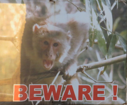 Beware of macaques sign