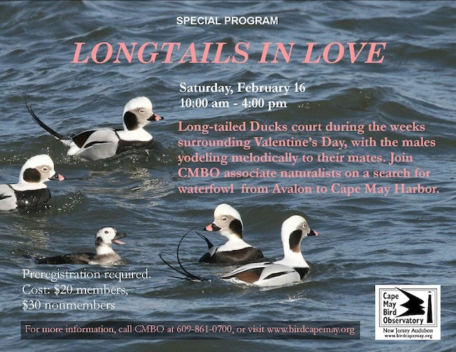 Longtails in Love Poster