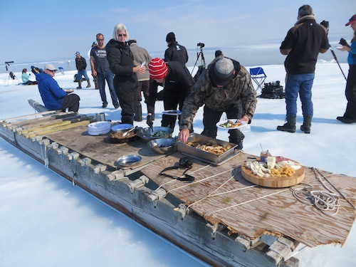 Lunch served on a qamutiq