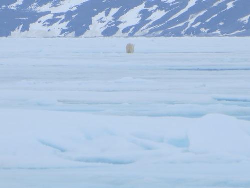 Polar Bear leaving
